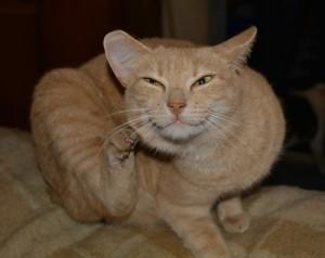 cat-227941_960_720