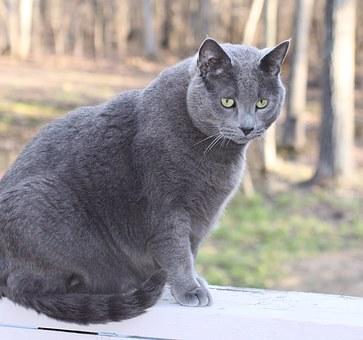 cat-1275101__340