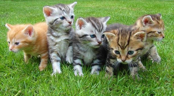 kittens-555822__340