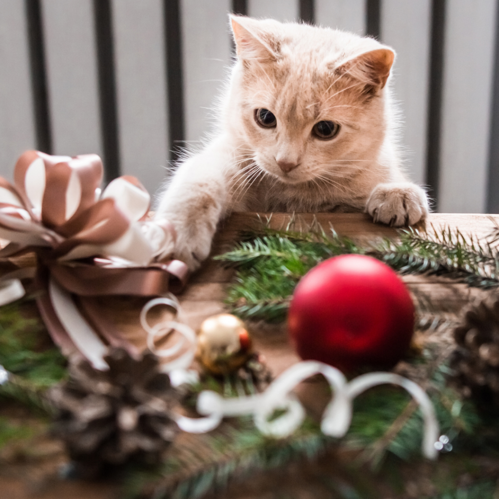 There's a lot you can do to prepare you home for your new puppy or kitten before Christmas.