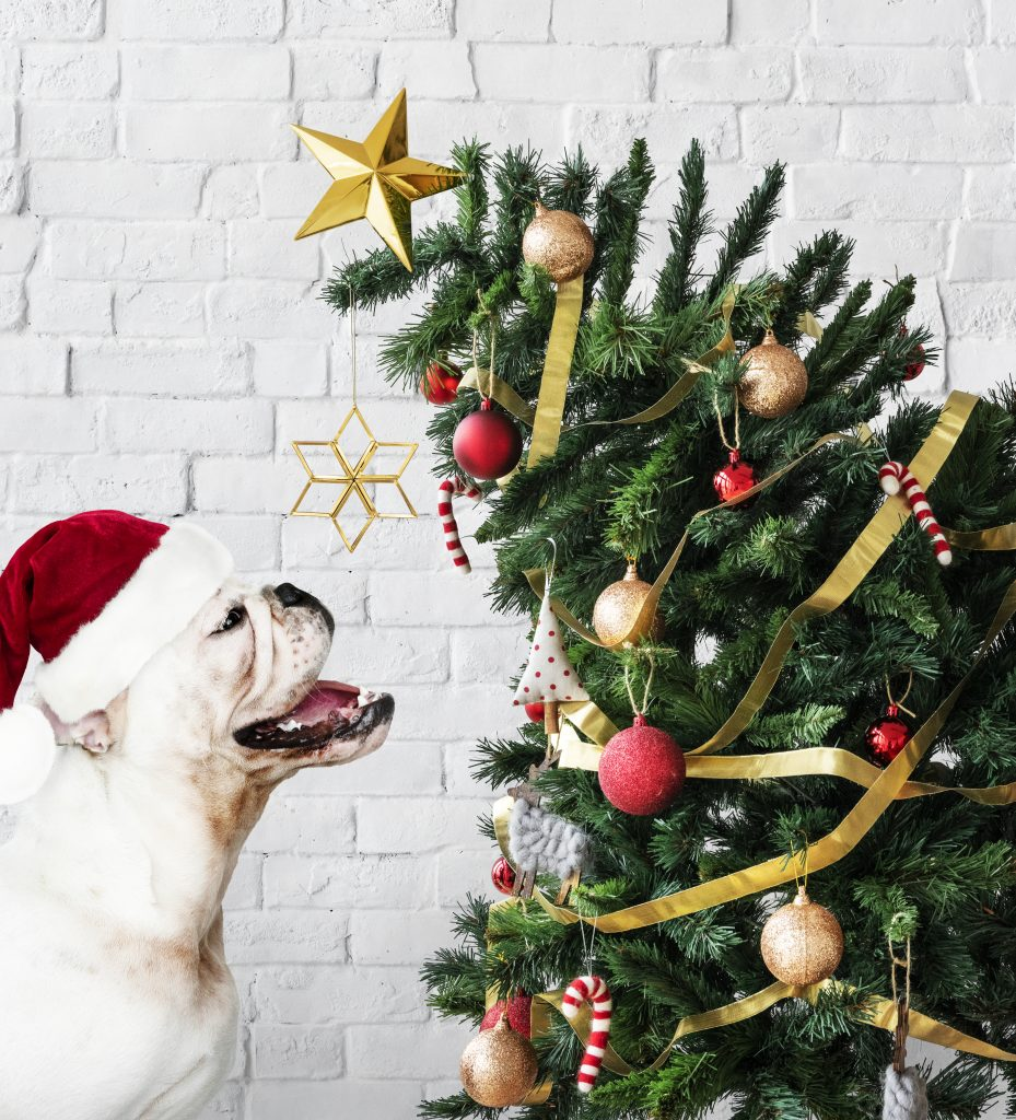 Plan ahead when getting a new pet for Christmas this year