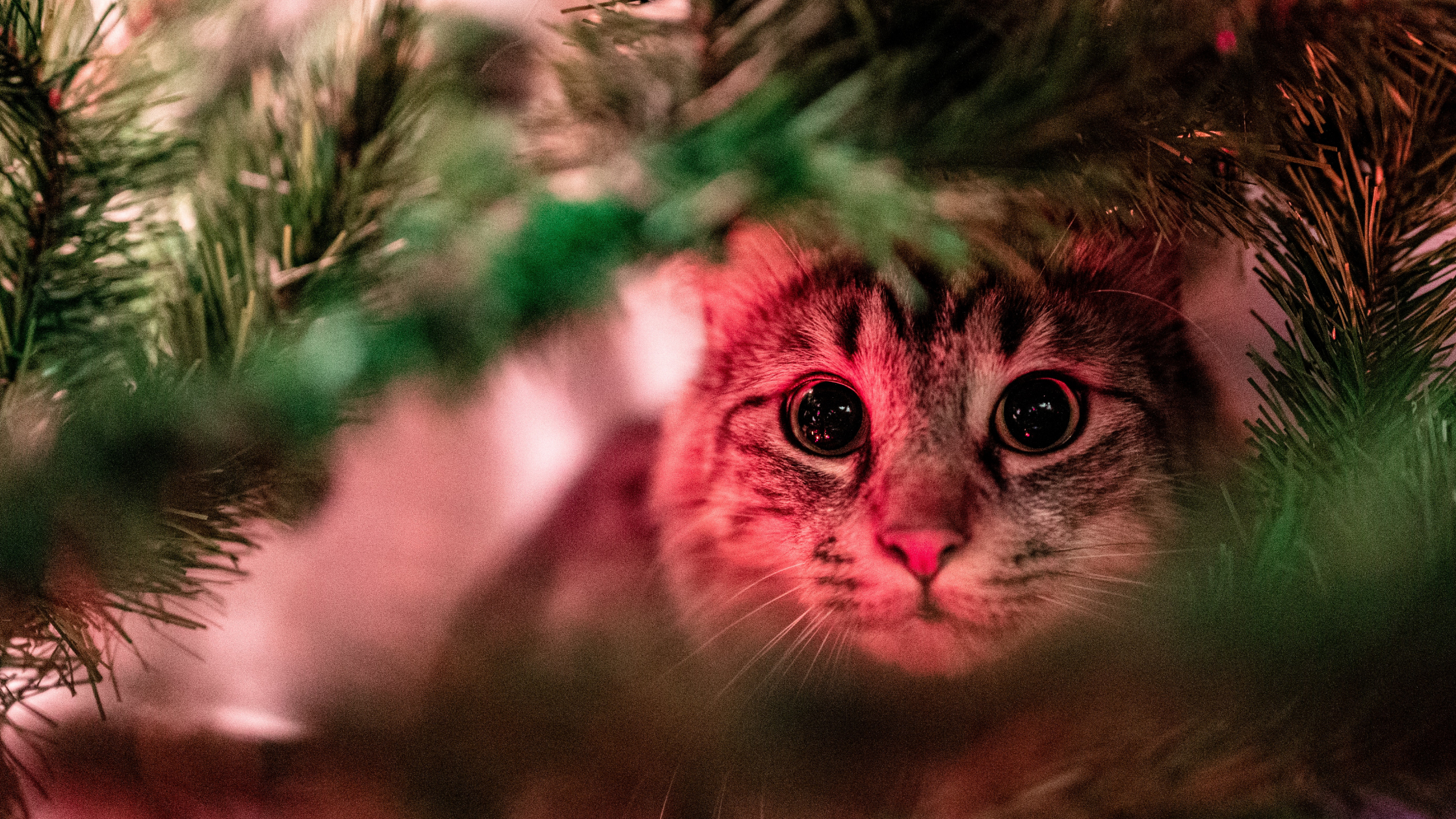 Top Christmas Safety Tips for Your Pet