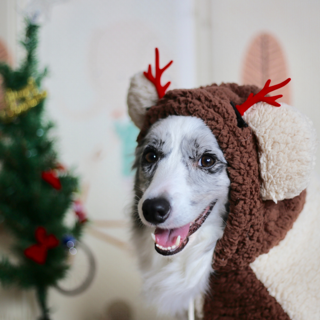 Keep your pets safe this holiday season with our top pet safety Christmas tips!