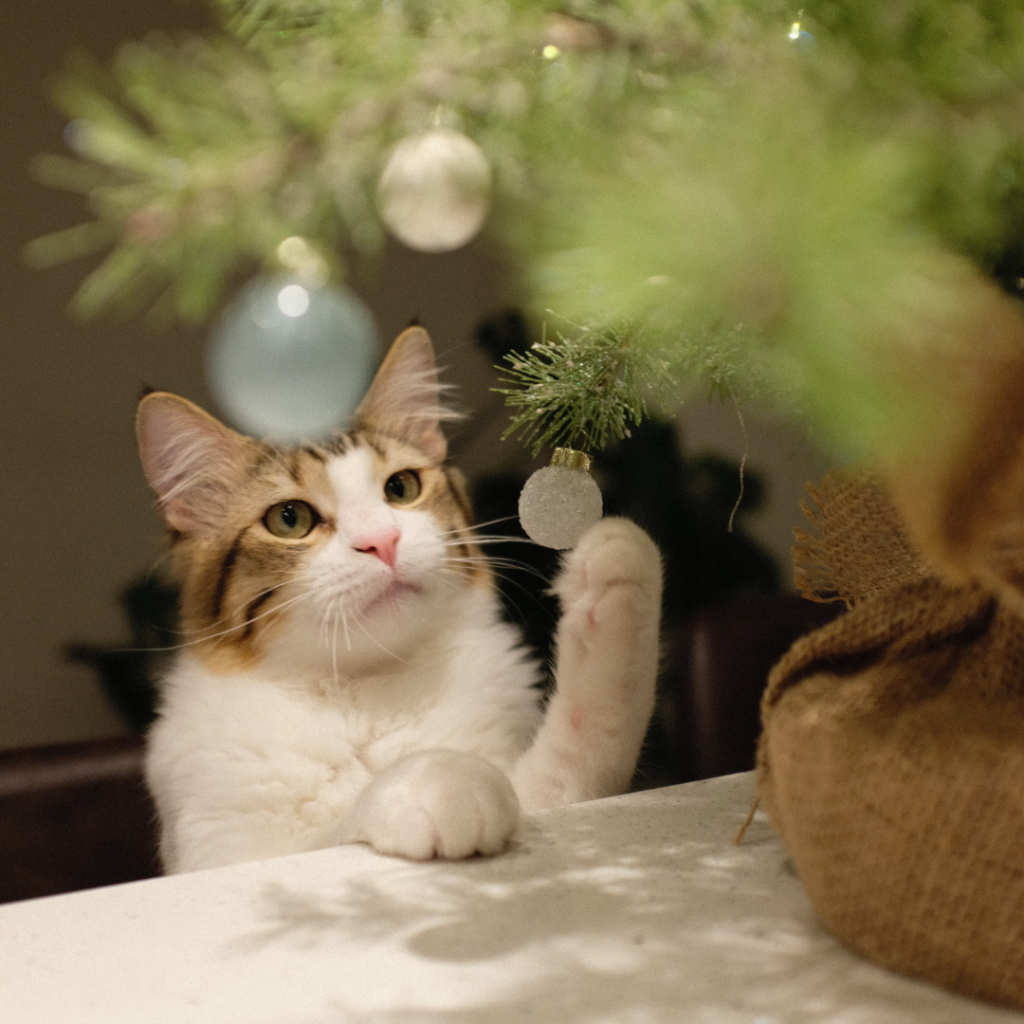 You should keep fragile or valuable ornaments on higher branches of your Christmas tree, and out of reach of your curious cat.