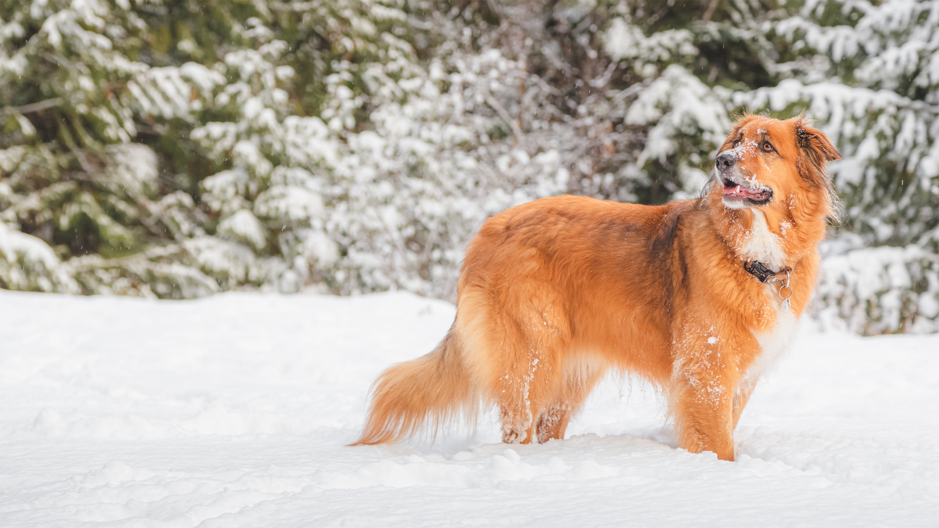 The Top 5 Cold weather Tips for Pet Owners