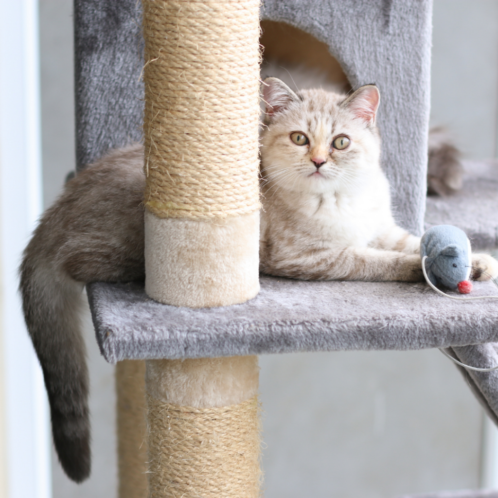 Keep your cats healthy with regular enriching activities