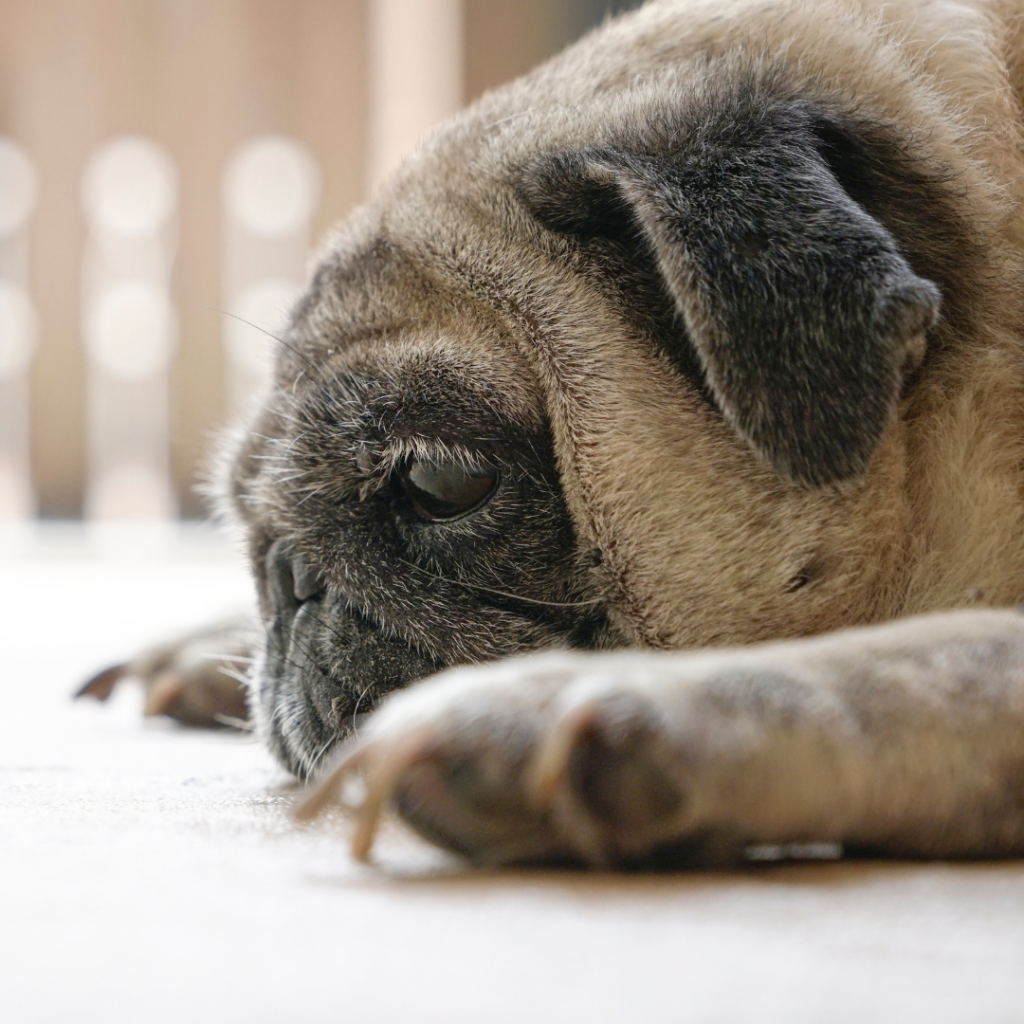 If your pet shows symptoms of heartworm disease, get them tested immediately!
