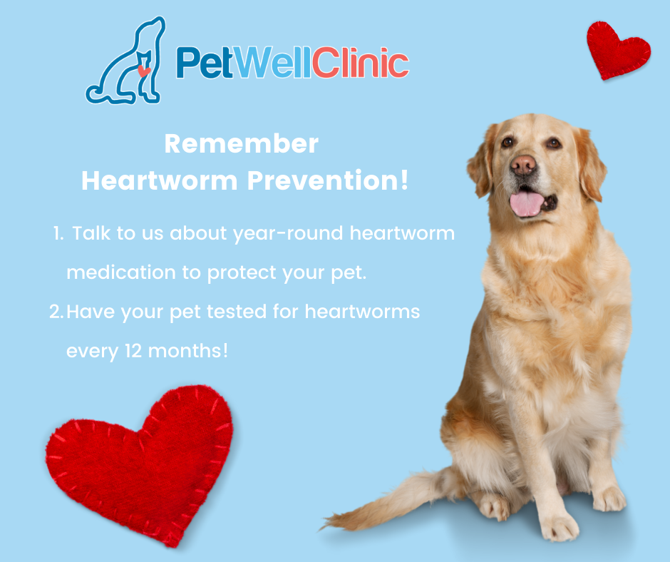 Check out our prevention options for heartworm disease!
