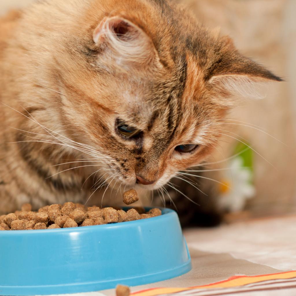 Pet Allergy Treatments