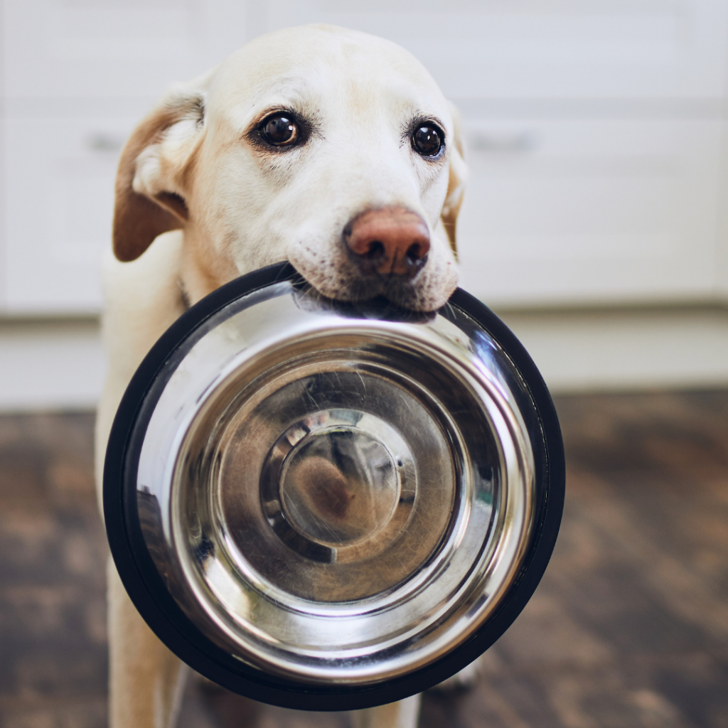 Are pet vitamins and supplements necessary?