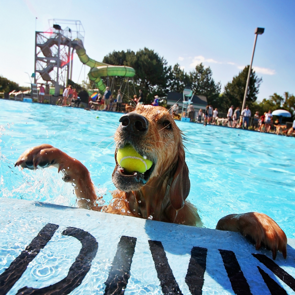 Swimming with your dog can be a fun activity in the summer