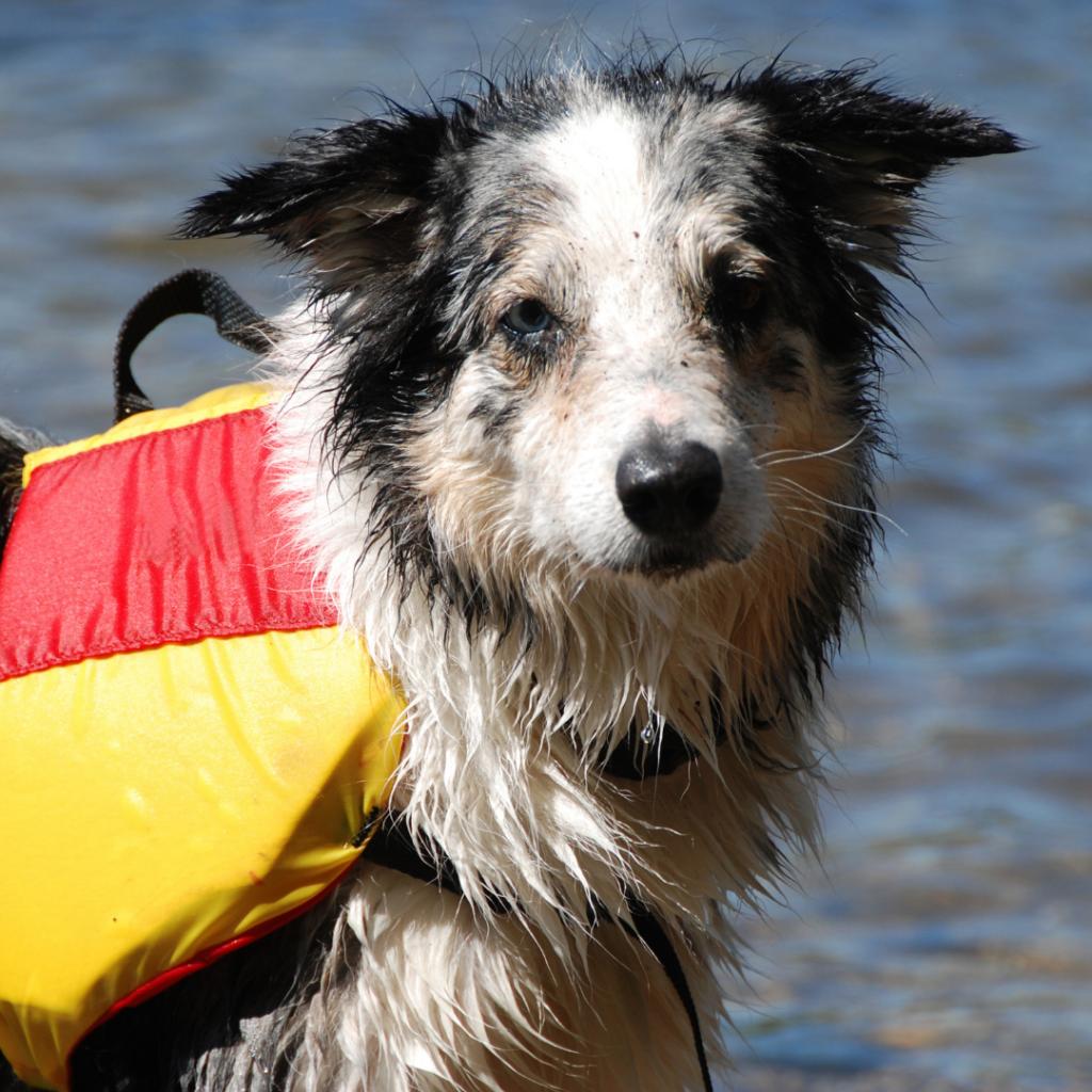 Dog-friendly water activities