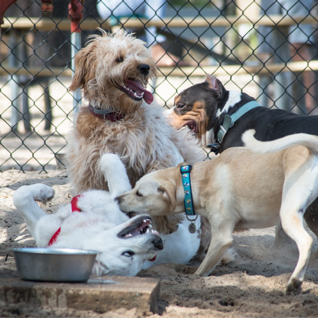 Most major cities have dog parks, or at least dog-friendly parks