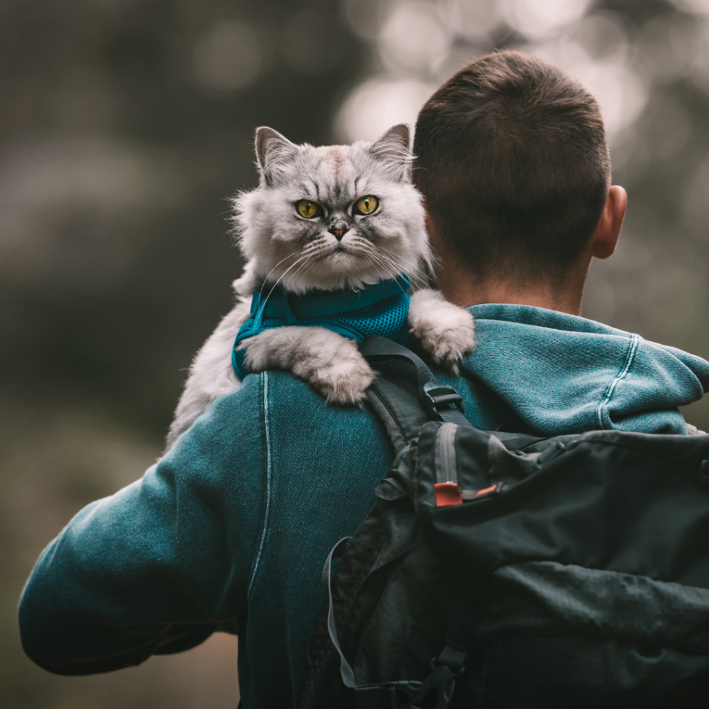 Make sure your cat is up to date on their vaccinations