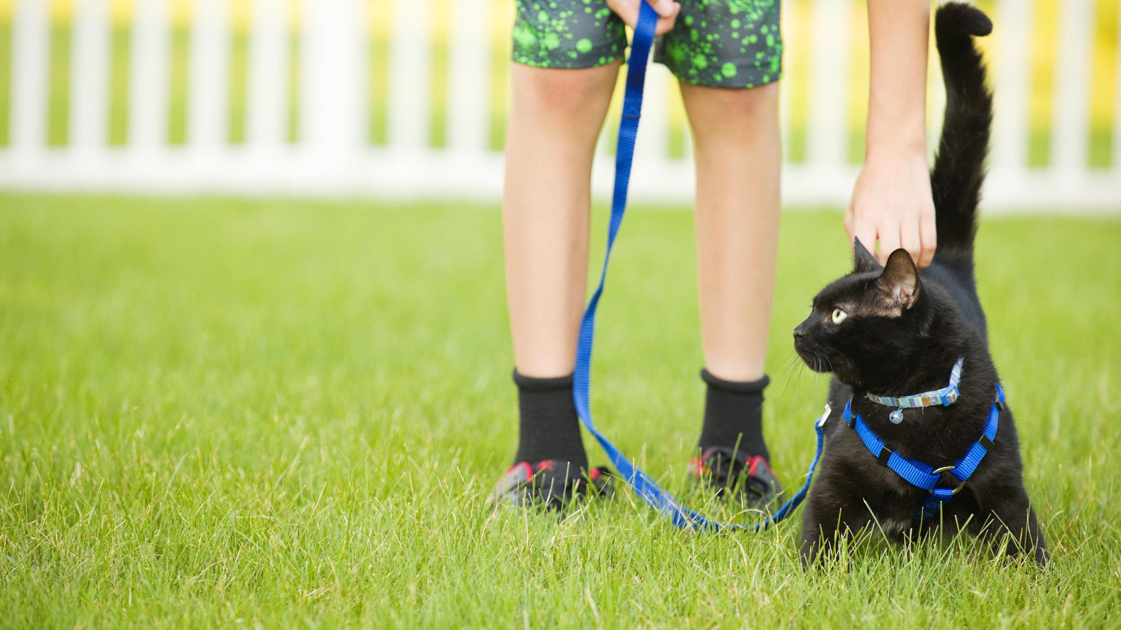 leash train your cat