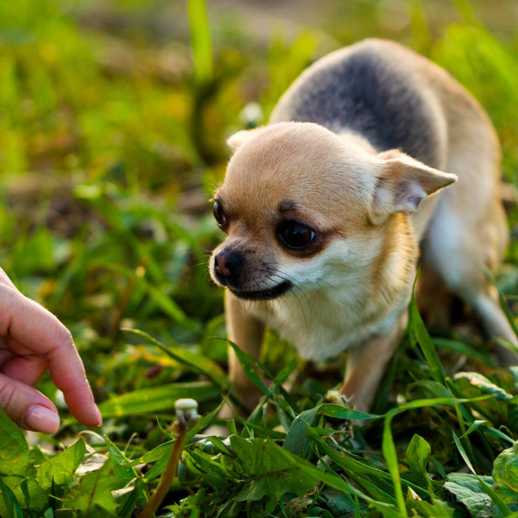 worried & nervous dog body language