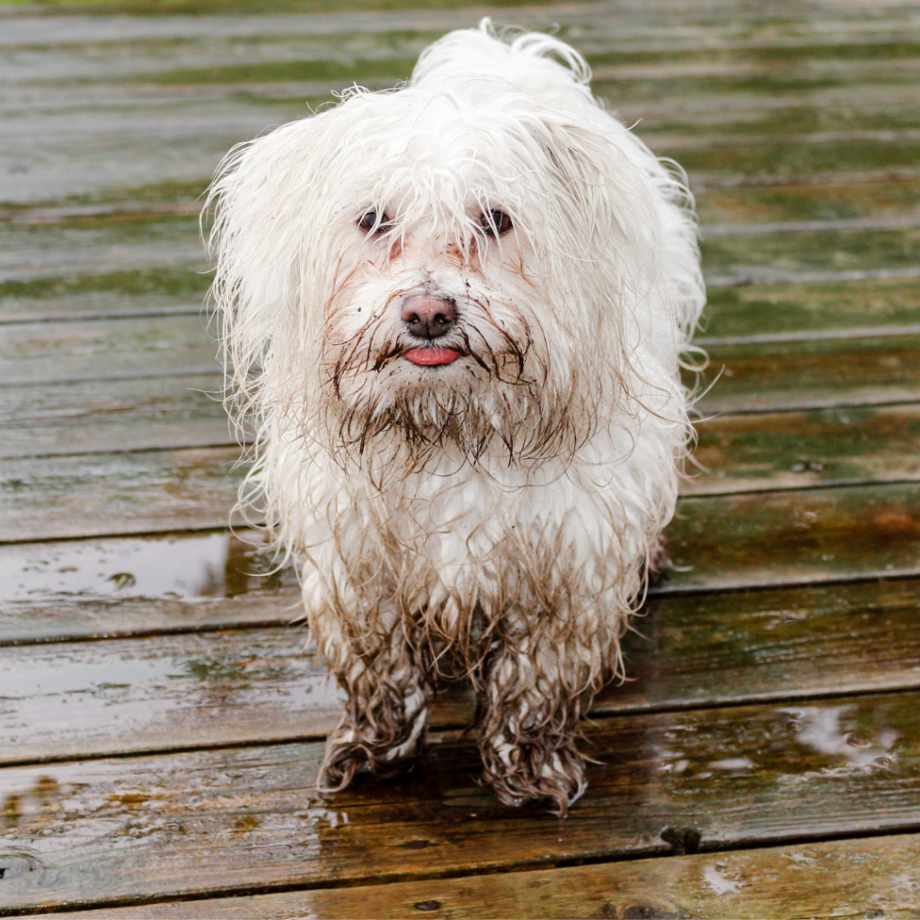 health benefits of bathing your dog